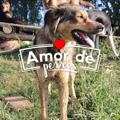 PURINA – Amor de perros