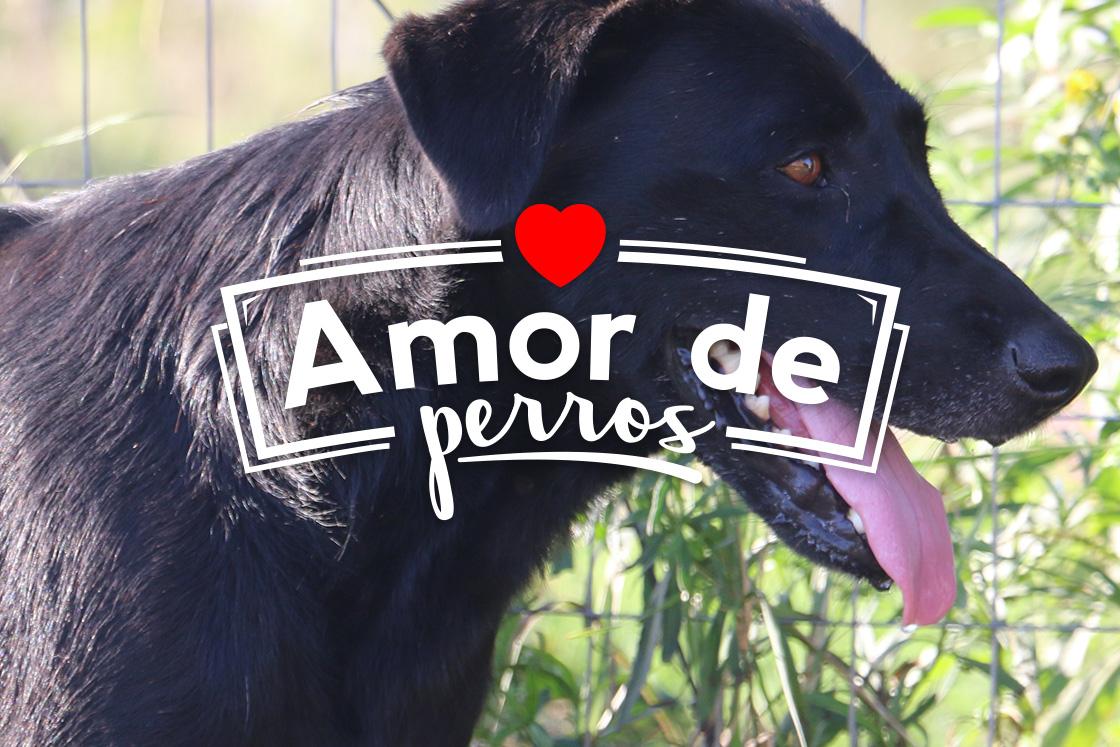 amor de perros_2
