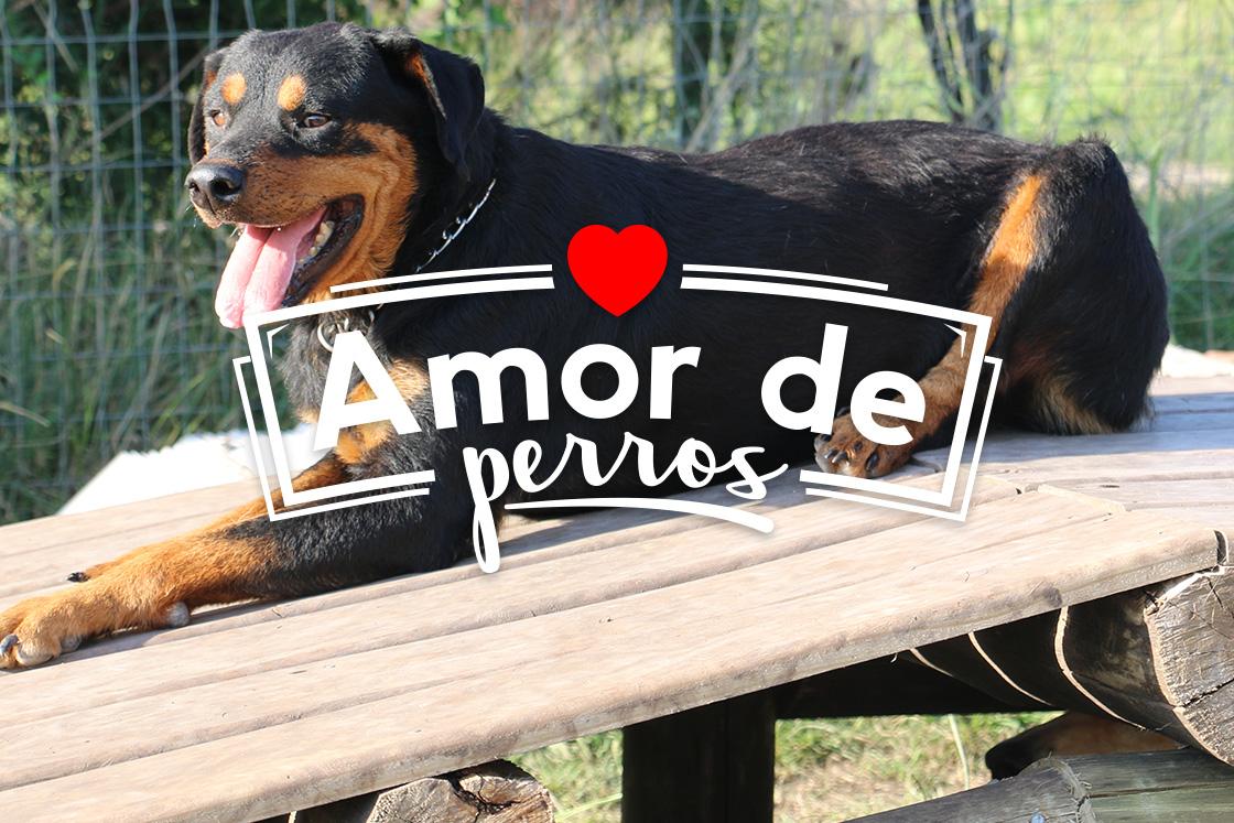 amor de perros_3