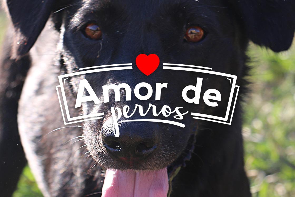 amor de perros_4